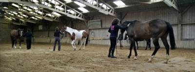 Ethologie equitation yoga